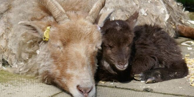 Rare Breeds Survival Trust awards first ever RBST Education Accreditation